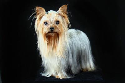 raymond, hoover, dog, breeder, raymond-hoover, dog-breeder, dundee, ny, new_york, usda, hoover-kenne